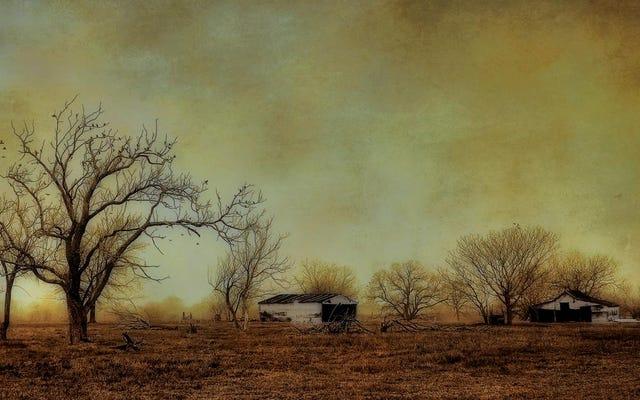 Aşırı Kuraklıklar Ağaçların Karbon Emme Yeteneğini Zayıflatıyor