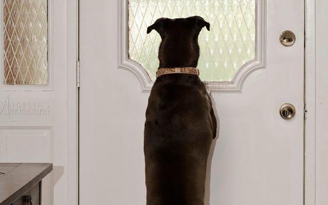 Empêchez votre chien d'aboyer lorsque vous êtes absent avec un petit dressage de friandises
