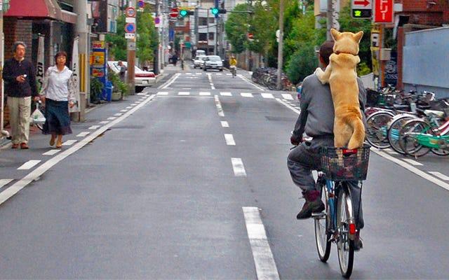 Hala bir motosikletle ilgili çitlerde misin? Önce Bisiklete Binin