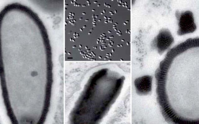 Naukowcy ożywiają nowy wirus sprzed 30 000 lat znaleziony na Syberii