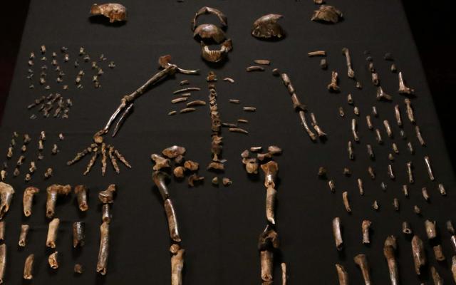 นักวิทยาศาสตร์ได้ค้นพบสิ่งมีชีวิตชนิดใหม่ที่คล้ายมนุษย์ในแอฟริกาใต้