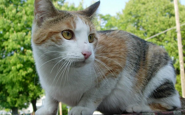 Kucing Liar Bisa Merusak Lingkungan
