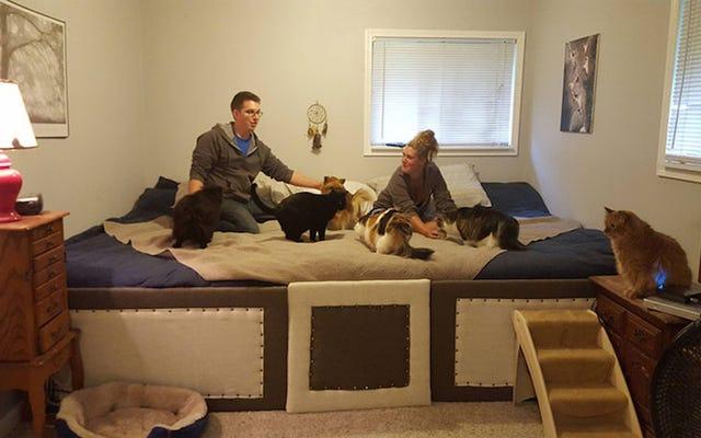 Pareja construye una estúpida cama grande para sus siete mascotas