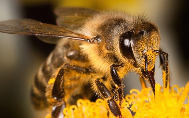 Bilime göre: Bir arının penisine sokmasına izin veren bilim adamı