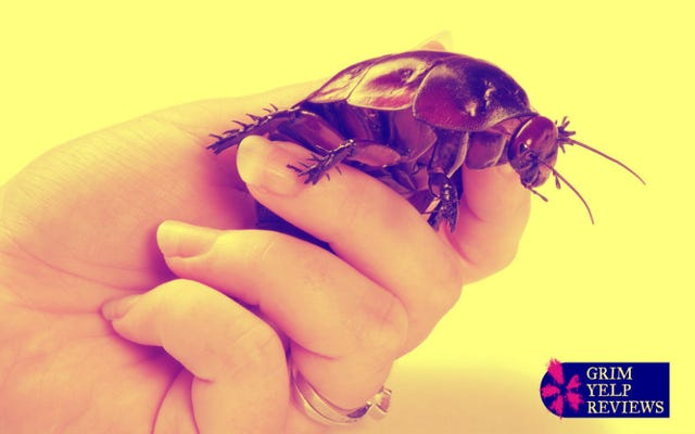 'แมงมุมขนาดใหญ่ครึ่งโหล': คำวิจารณ์ Yelp ที่น่ากลัวอย่างยิ่งของผู้ทำลายล้าง