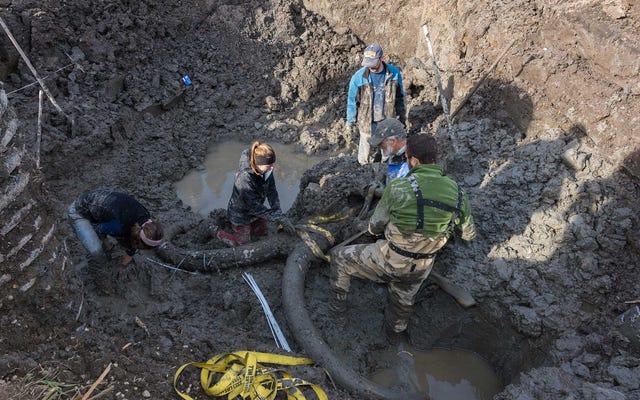 ミシガン州の農民が、フィールドで珍しい、ほぼ完全なマンモスの化石を発見