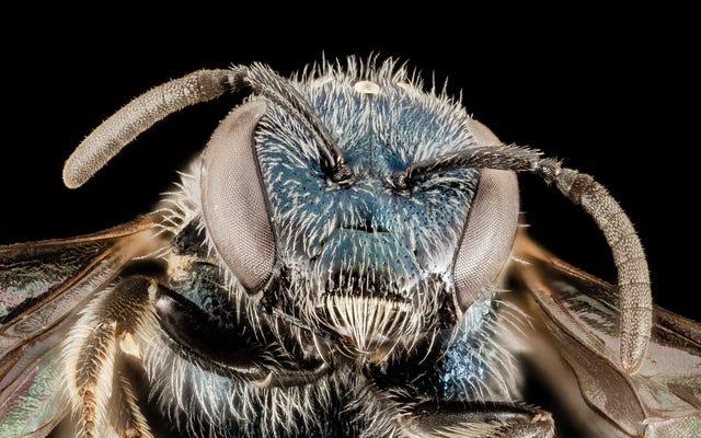 На этих изысканных фотографиях пчел видны все тонкие волосы, антенны и крылышки