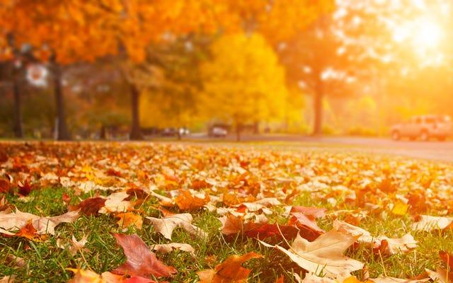 Neden Mevsim Değişikliğini Kokuyoruz?