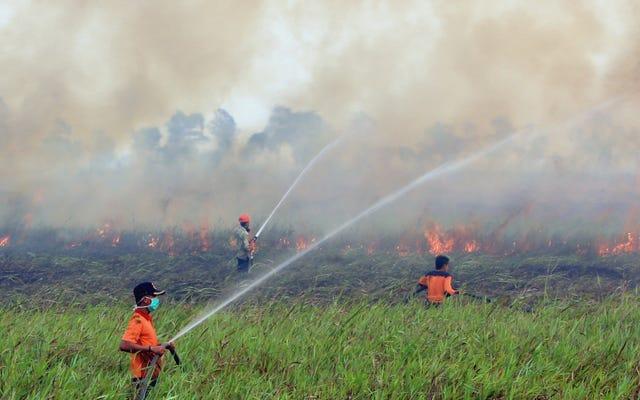 इंडोनेशिया में आग सभी अमेरिकियों के संयोजन से अधिक कार्बन उत्सर्जित कर रही है