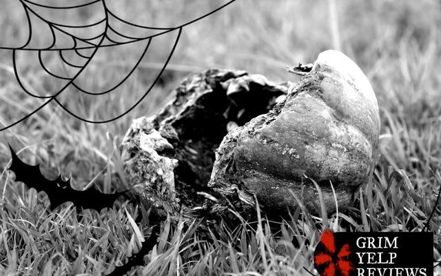 'Я видел корову, прикованную к забору': удивительно мрачные отзывы о тыквенных грядках