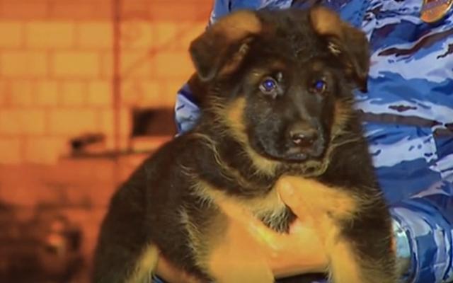 ロシアは襲撃で殺された警察犬を称えるためにフランスに子犬を与える