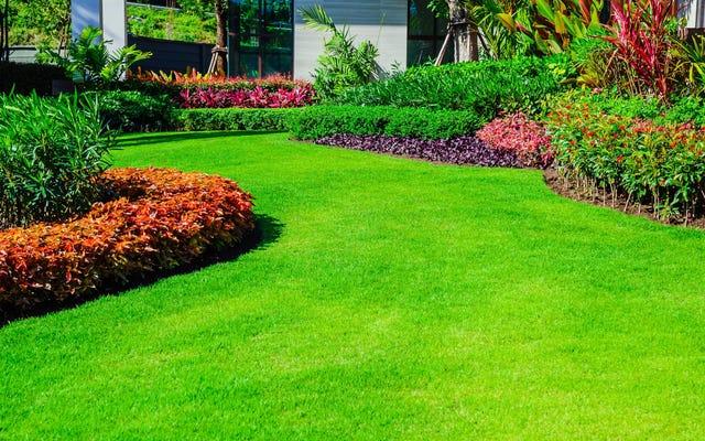 より環境に優しく、より健康的な芝生を育てる10の方法