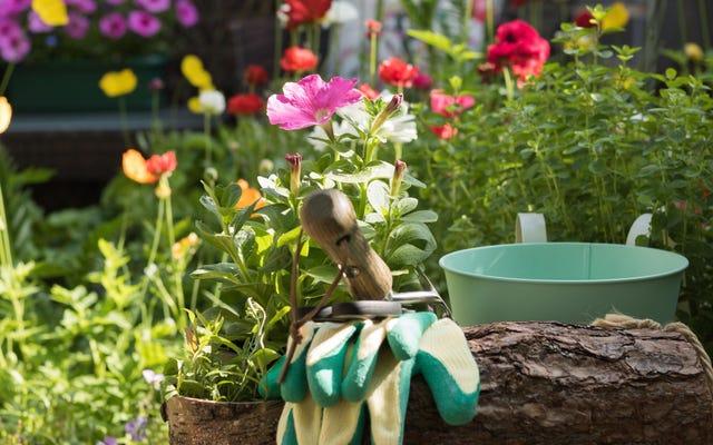 Sezonun Sonuna Hazırlanmak İçin Bu Bahçe Görevlerini Ağustos'ta Tamamlayın