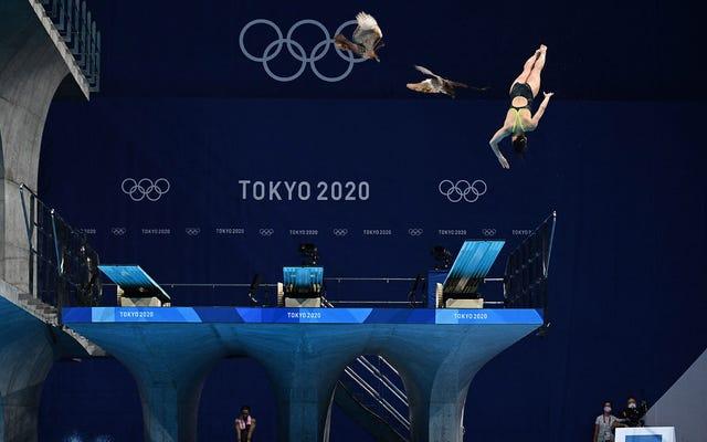인근 플랫폼에 둥지를 튼 매에게 괴로워하는 올림픽 다이버들