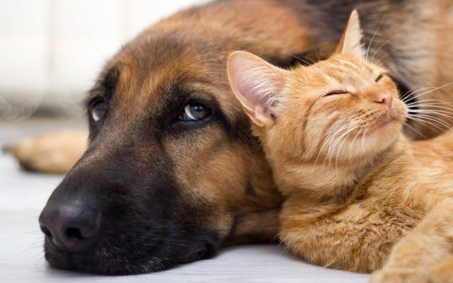 Как избежать заражения распространенными заболеваниями домашних животных