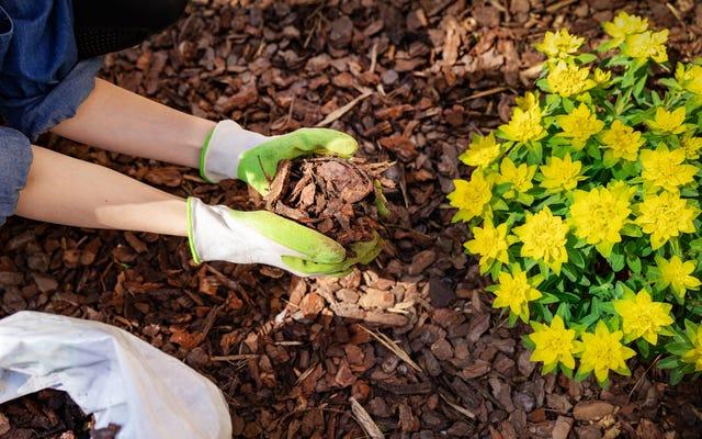 अपने फूलों की क्यारियों और बगीचे में मल्च का उपयोग कैसे करें