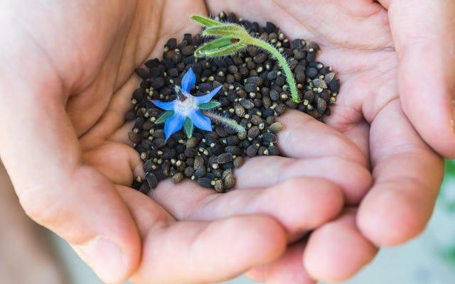 Zasadź te szybko kiełkujące nasiona, jeśli chcesz jak najszybciej założyć ogród