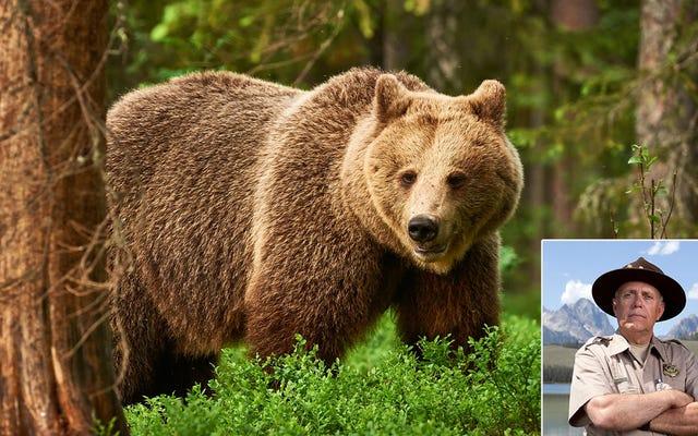 Смотритель парка спасает медведя, сбившегося с пути