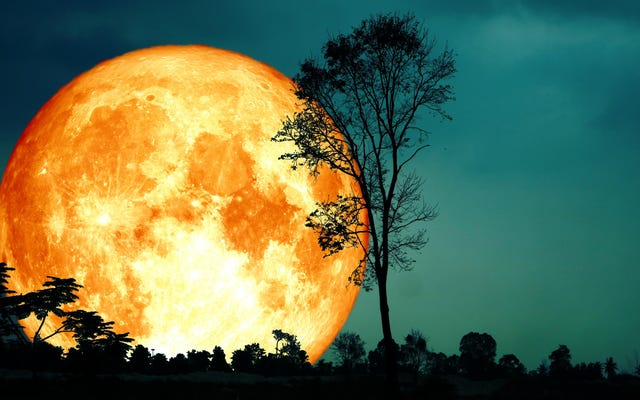 เมื่อใดควรดู 'Harvest Moon' ที่ Peak Brilliance ในเดือนนี้