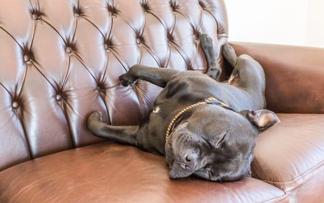 Как сделать ваш дом более дружелюбным к домашним животным
