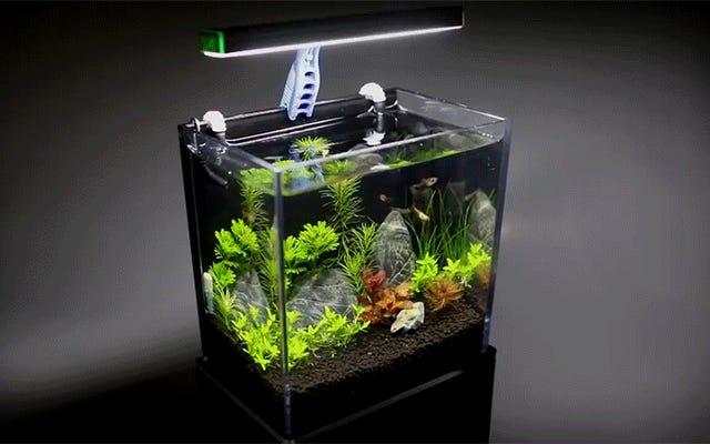 GoProボックスを稼働中の水族館にリサイクルすることがアップグレードする最良の理由です