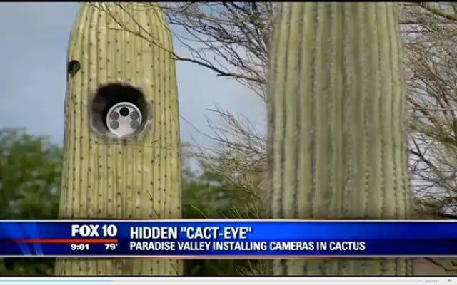 เยี่ยมมากตอนนี้แม้แต่ Cacti ก็สามารถสอดแนมเราได้