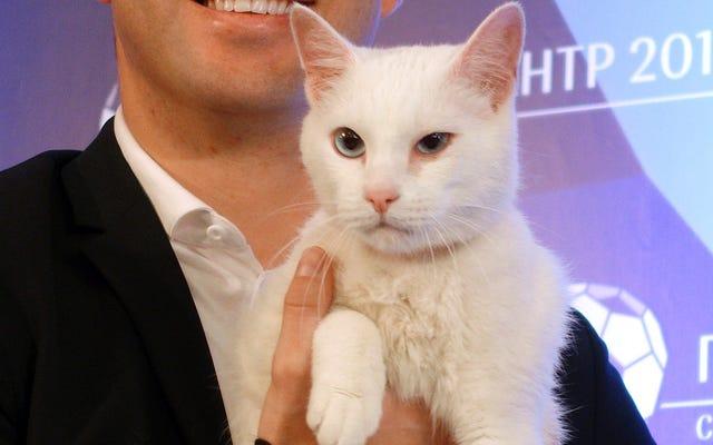 わずかに欠陥のある博物館の猫明らかにワールドカップの予測で勝つ動物
