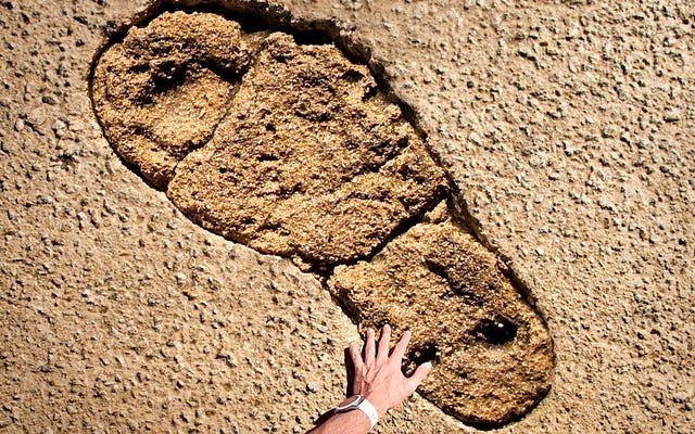 В Австралии обнаружен самый большой в мире принт обуви динозавра