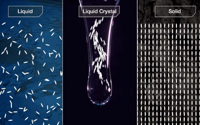 ナメクジのスライムは液晶であり、実際にはかなり信じられないほどです