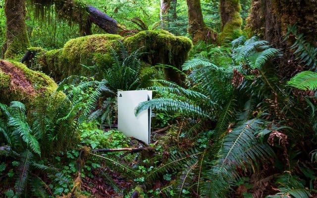 環境保護の勝利:販売されたPS5ごとに、ソニーはアマゾンの熱帯雨林にPS4を植えます