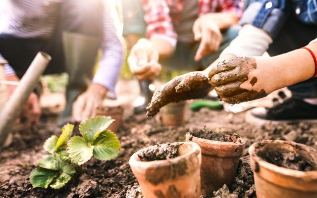 春の庭を植える方法と時期