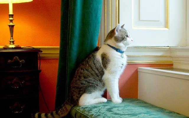 Street Cat se digna unirse al servicio diplomático del Reino Unido