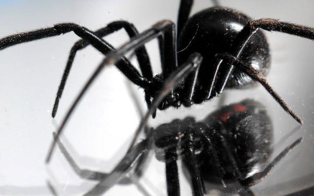 彼は自家製の火炎放射器で黒い未亡人のクモを殺そうとして家に火を放ちます