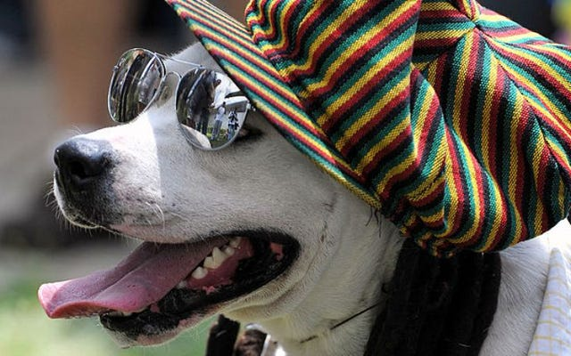 Los perros son fríos como la mierda, aman el reggae y el rock suave