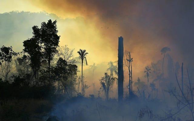 Давай проверим на Амазонке, и черт возьми, это не хорошо