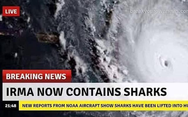 허리케인 Irma에는 상어가 없습니다. 가짜가 다시 소셜 네트워크를 침범했습니다.