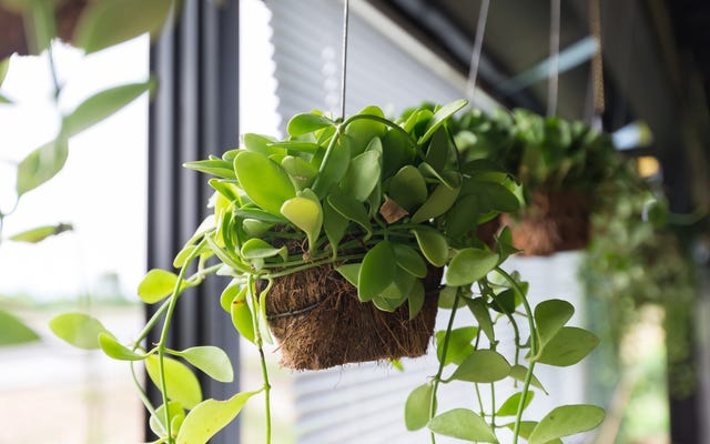 より自然にあなたの家を冷やす方法