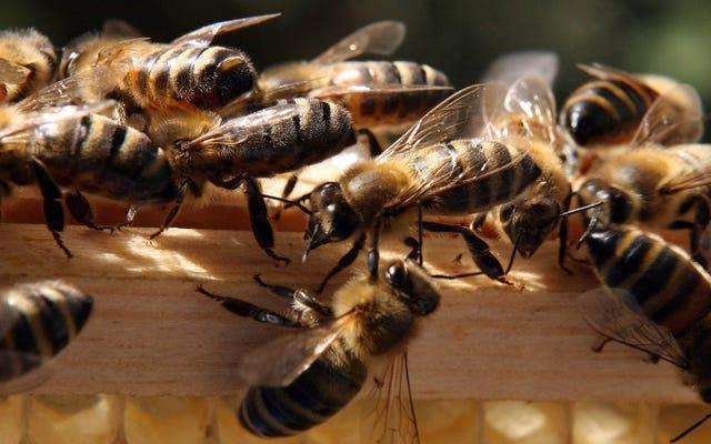 ผึ้งเพิ่มขึ้น!