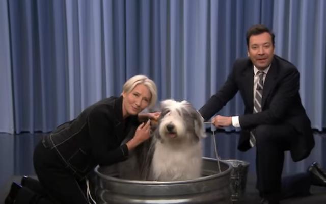 एम्मा थॉम्पसन एसएनएल की मेजबानी की बात करते हैं, देर रात की मेजबानी करते हैं, और फिर जिमी फॉलन के साथ एक कुत्ते को धोते हैं