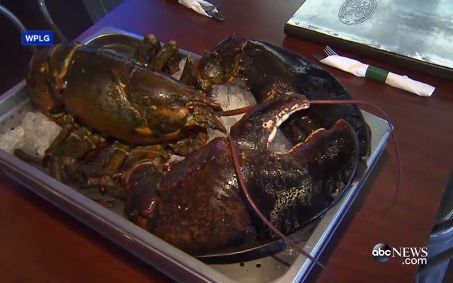 Hanno salvato un'aragosta di 100 anni che stava per essere cucinata, ma non sono arrivati vivi all'acquario