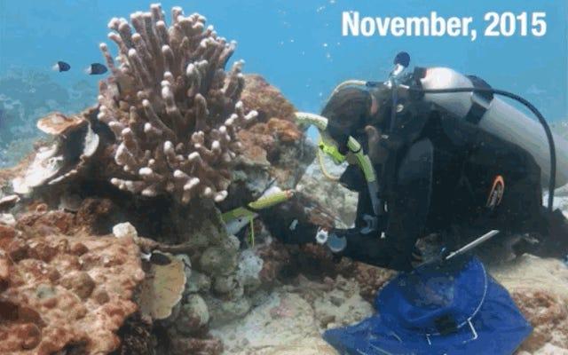 Эль-Ниньо оставил позади все эти жуткие коралловые города-призраки
