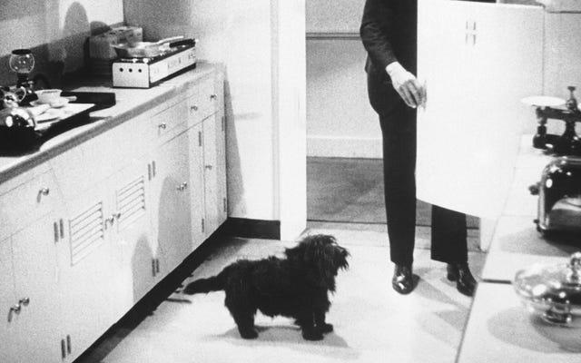 ホワイトハウスでできるだけ多くのペットが欲しい