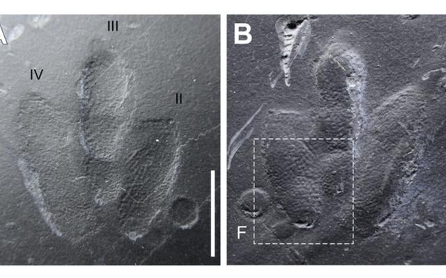 Mereka menemukan beberapa jejak kaki dinosaurus terawetkan dengan sangat baik sehingga memungkinkan kita untuk melihat seperti apa kulit mereka
