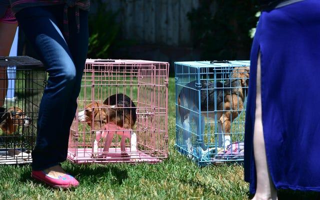 ตอนนี้ FDA อนุญาตให้สัตว์ทดลองขึ้นไปรับเลี้ยงบุตรบุญธรรม