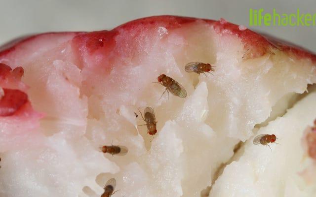 วิธีกำจัดแมลงวันผลไม้ในครัวของคุณ