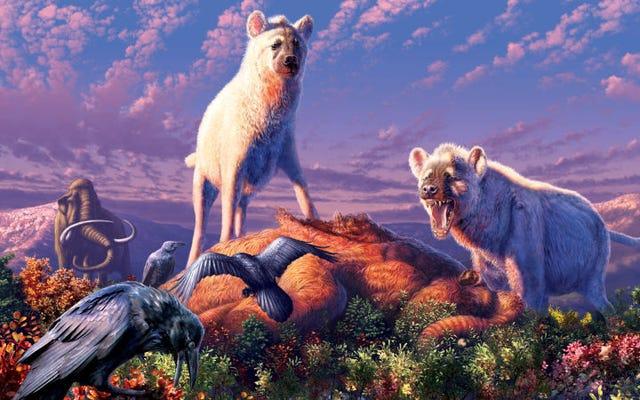 これらの細いハイエナは、最後の氷河期に北極圏に住んでいました