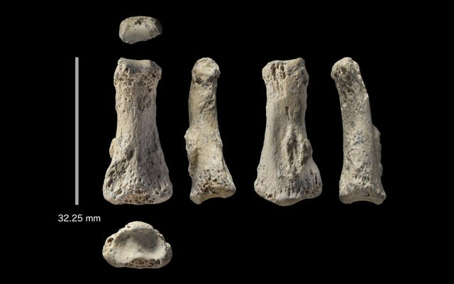 サウジアラビアで発見された88、000年前の中指は人類の歴史を書き換えることができた
