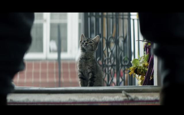Keanu'daki bu sevimli lanet kedi stunts yapmak için eğitildi