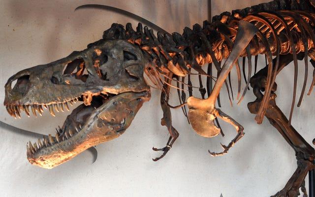 Lebih Kecil tapi Masih Mematikan: Wawasan Baru dalam Kehidupan Remaja T. Rex