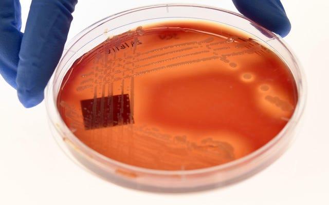 Đã đến lúc loại bỏ Big Pharma khỏi nghiên cứu thuốc kháng sinh, các nhà khoa học tranh luận